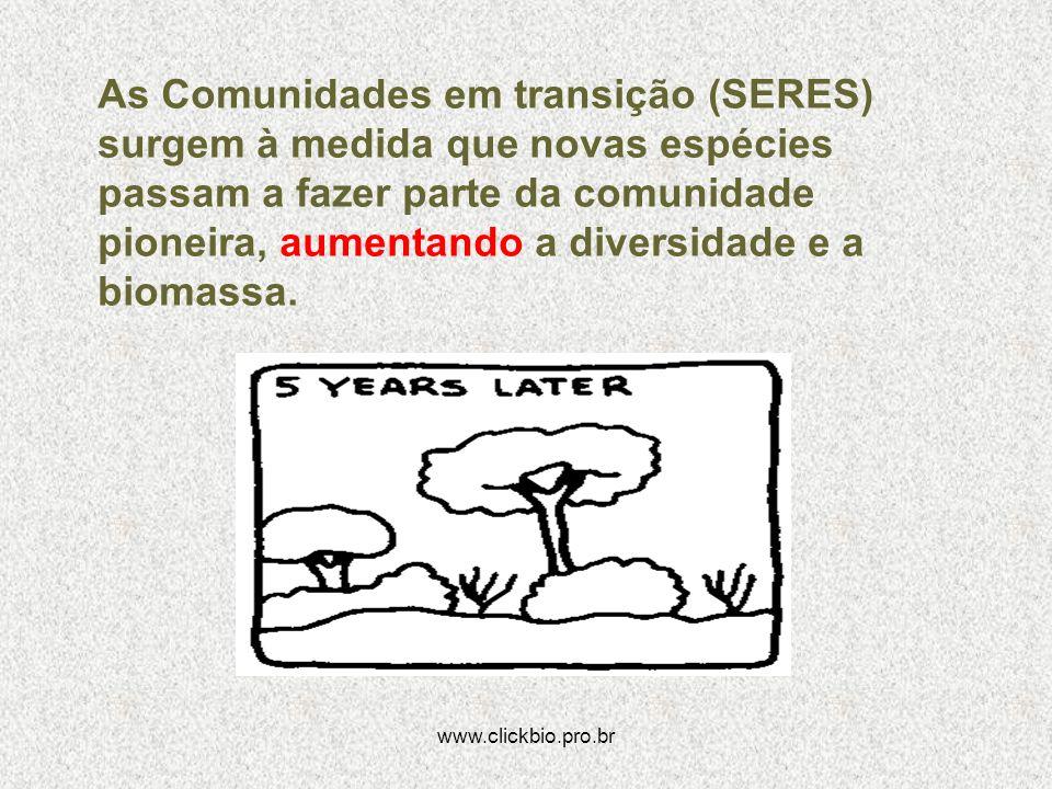 www.clickbio.pro.br As Comunidades em transição (SERES) surgem à medida que novas espécies passam a fazer parte da comunidade pioneira, aumentando a d