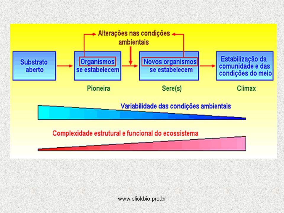 www.clickbio.pro.br