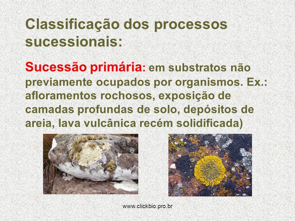 Classificação dos processos sucessionais: Sucessão primária : em substratos não previamente ocupados por organismos. Ex.: afloramentos rochosos, expos