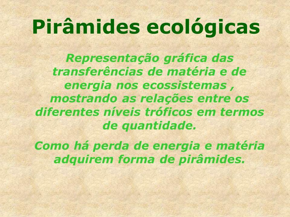 Pirâmides ecológicas Representação gráfica das transferências de matéria e de energia nos ecossistemas, mostrando as relações entre os diferentes níve