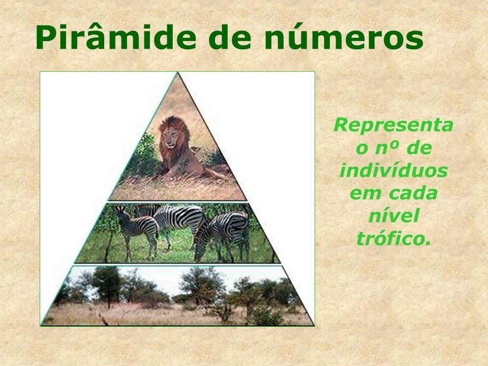 Pirâmide de números Representa o nº de indivíduos em cada nível trófico.
