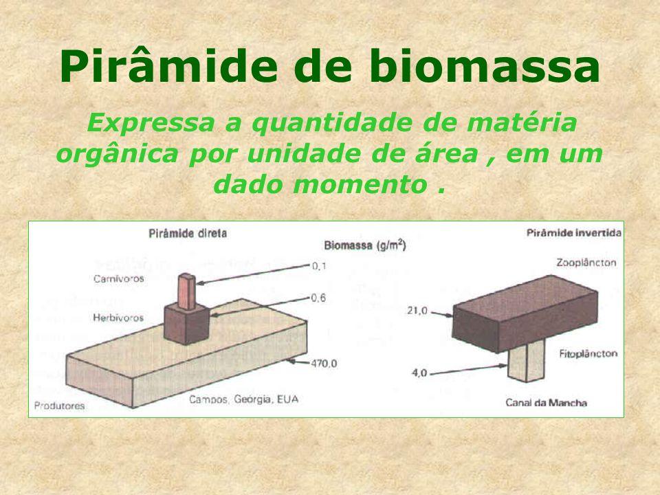 Pirâmide de biomassa Expressa a quantidade de matéria orgânica por unidade de área, em um dado momento.