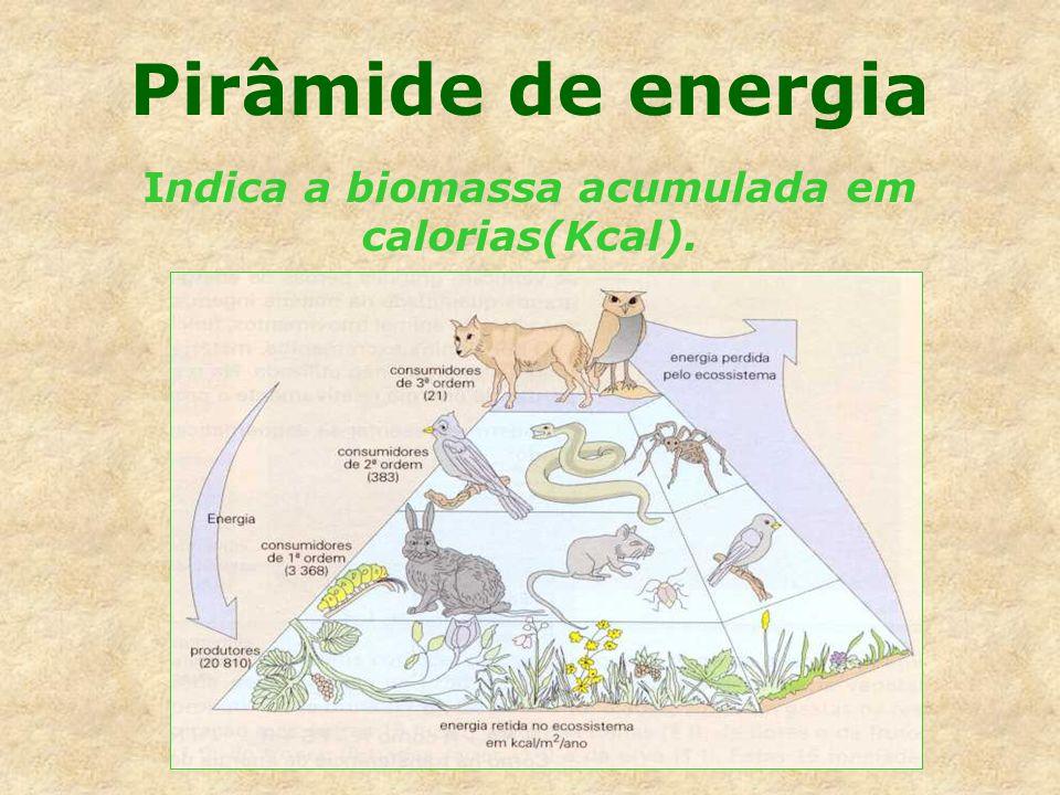 Pirâmide de energia Indica a biomassa acumulada em calorias(Kcal).