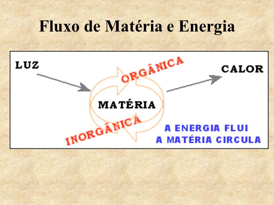 Fluxo de Matéria e Energia