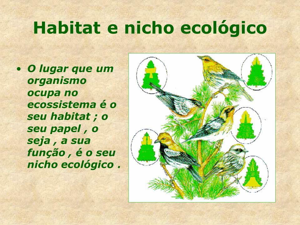 Objeto de estudo População Comunidade Ecossistema Biosfera.