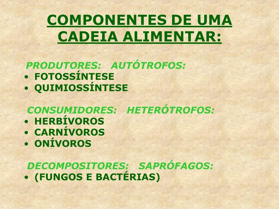 COMPONENTES DE UMA CADEIA ALIMENTAR: PRODUTORES: AUTÓTROFOS: FOTOSSÍNTESE QUIMIOSSÍNTESE CONSUMIDORES: HETERÓTROFOS: HERBÍVOROS CARNÍVOROS ONÍVOROS DE