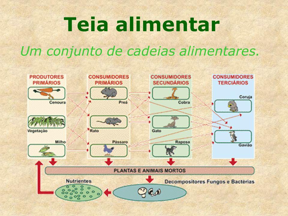 Nível trófico Posição do organismo numa cadeia alimentar.