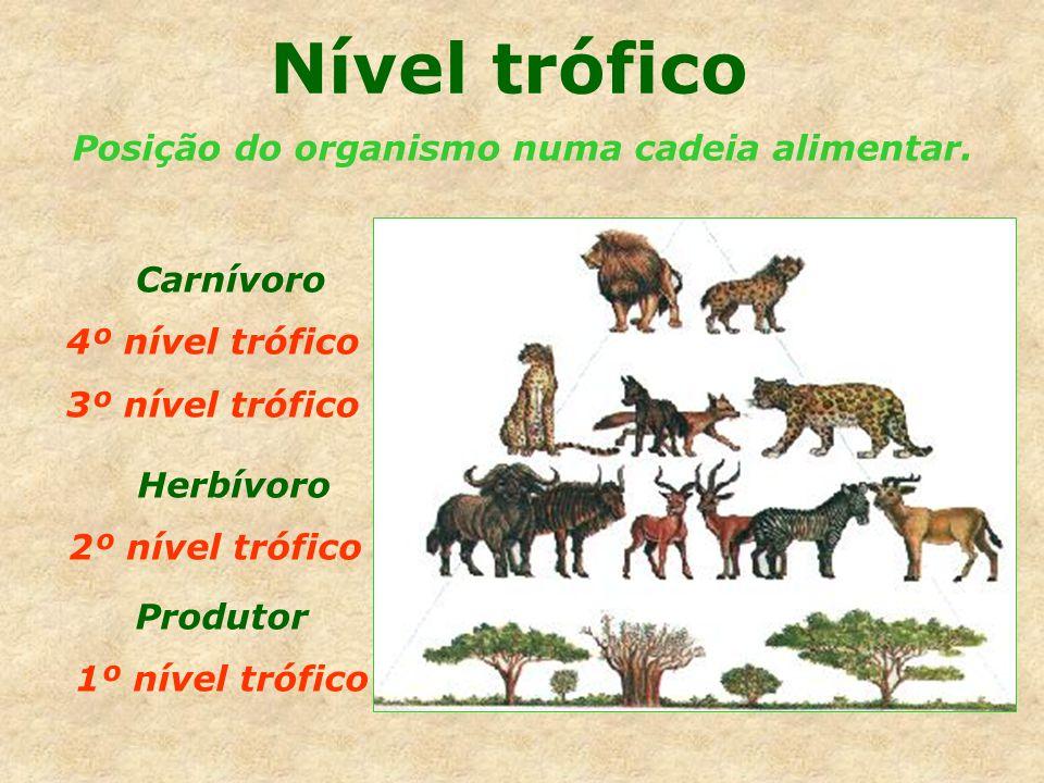 Nível trófico Posição do organismo numa cadeia alimentar. Produtor 1º nível trófico Herbívoro 2º nível trófico Carnívoro 4º nível trófico 3º nível tró
