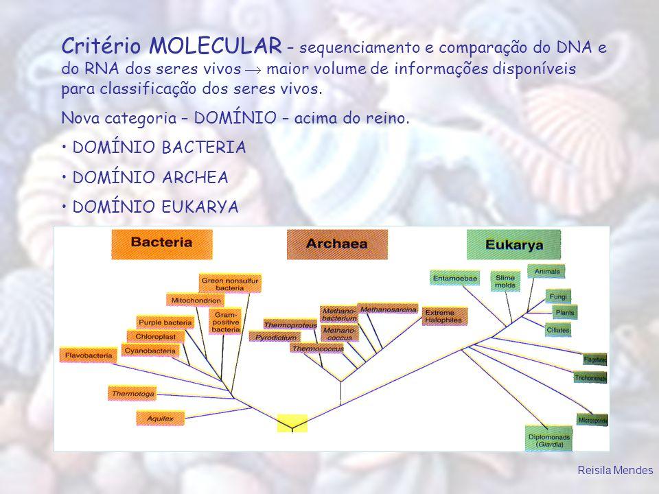 Critério MOLECULAR – sequenciamento e comparação do DNA e do RNA dos seres vivos maior volume de informações disponíveis para classificação dos seres