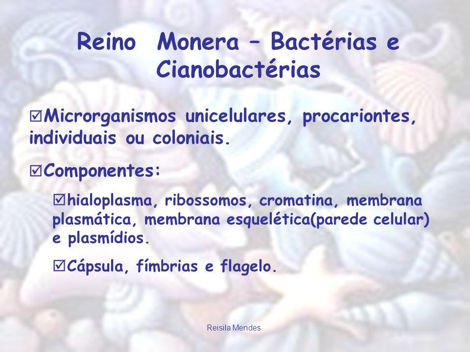 Reisila Mendes Reino Monera – Bactérias e Cianobactérias Microrganismos unicelulares, procariontes, individuais ou coloniais. Componentes: hialoplasma