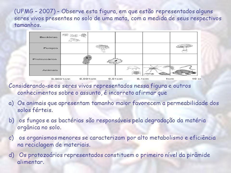 (UFMG – 2007) – Observe esta figura, em que estão representados alguns seres vivos presentes no solo de uma mata, com a medida de seus respectivos tam