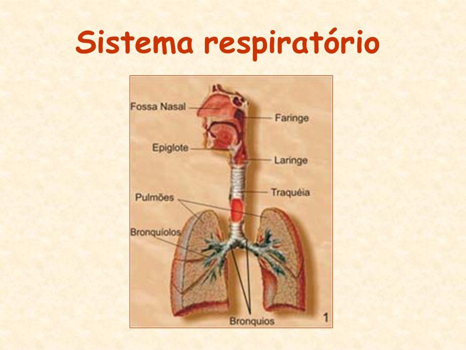 Função do sistema respiratório: Retirar o oxigênio do ambiente e eliminar o gás carbônico.