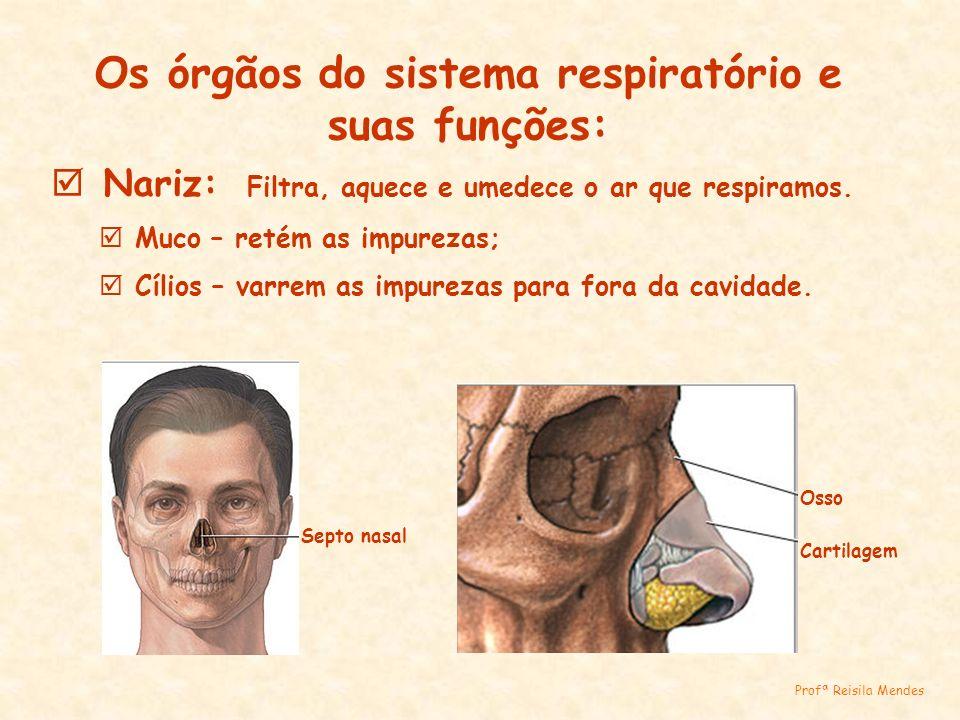 Os órgãos do sistema respiratório e suas funções: Nariz: Filtra, aquece e umedece o ar que respiramos. Muco – retém as impurezas; Cílios – varrem as i