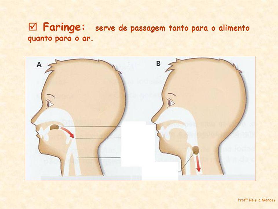 Faringe: serve de passagem tanto para o alimento quanto para o ar. Profª Reisila Mendes