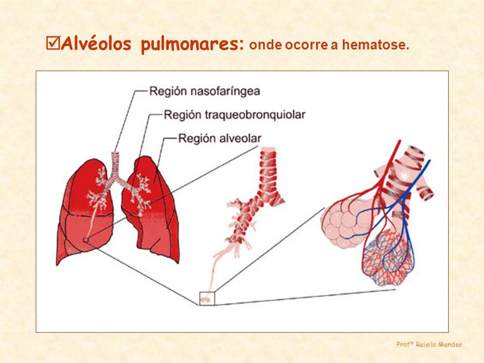 Alvéolos pulmonares : onde ocorre a hematose. Profª Reisila Mendes