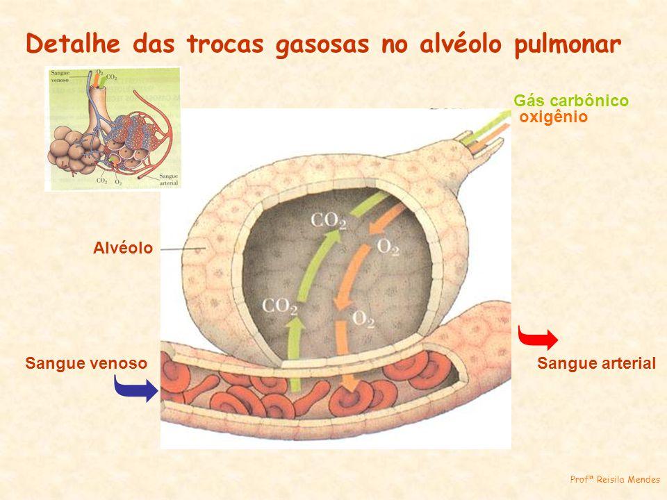 Alvéolo Sangue venoso Sangue arterial Gás carbônico oxigênio Detalhe das trocas gasosas no alvéolo pulmonar Profª Reisila Mendes