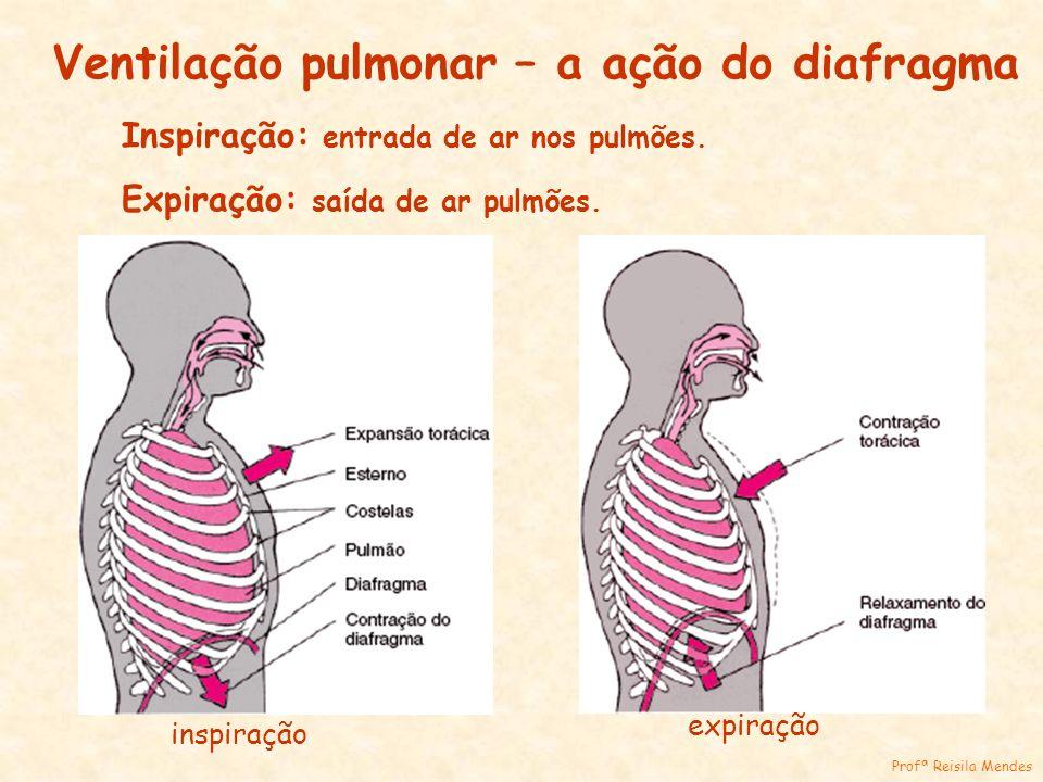 Ventilação pulmonar – a ação do diafragma Inspiração: entrada de ar nos pulmões. Expiração: saída de ar pulmões. inspiração expiração Profª Reisila Me