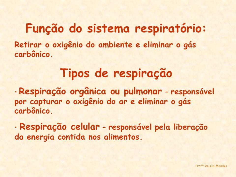 Função do sistema respiratório: Retirar o oxigênio do ambiente e eliminar o gás carbônico. Tipos de respiração Respiração orgânica ou pulmonar – respo