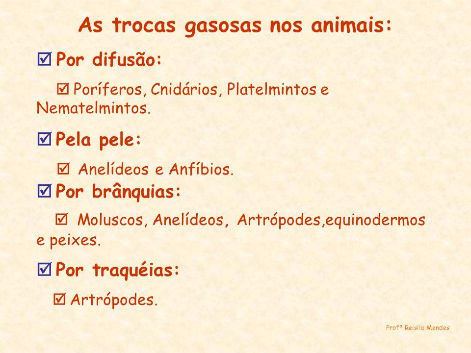 As trocas gasosas nos animais: Por difusão: Poríferos, Cnidários, Platelmintos e Nematelmintos. Pela pele: Anelídeos e Anfíbios. Por brânquias: Molusc