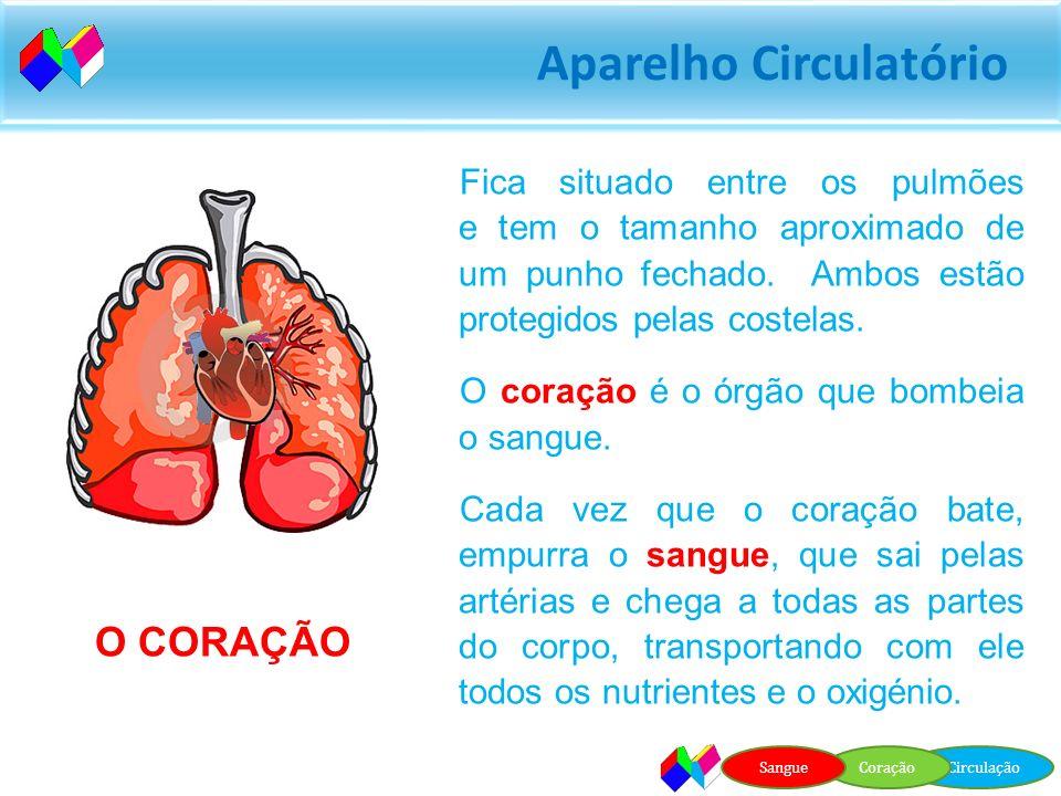 Aparelho Circulatório O sangue leva o oxigénio dos pulmões até às células O sangue leva o dióxido de carbono das células até aos pulmões. CirculaçãoCo