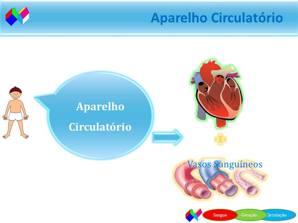 Aparelho Circulatório O sangue está em constante movimento. O trajecto do sangue no nosso corpo chama-se circulação. Aparelho responsável pela circula