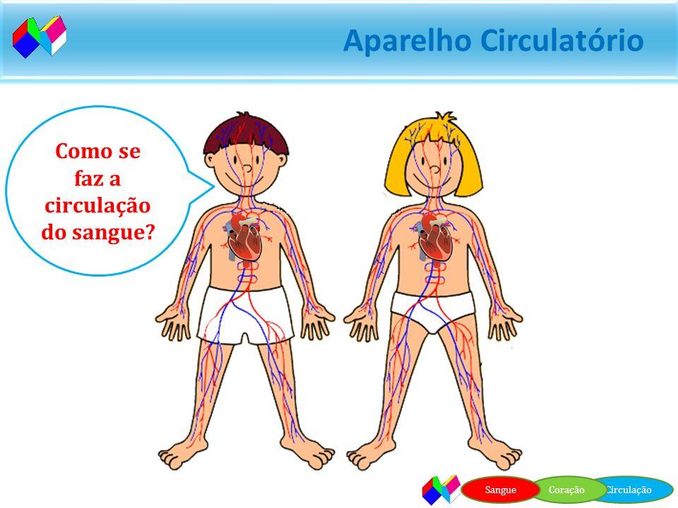 Aparelho Circulatório Vasos Sanguíneos Aparelho Circulatório CirculaçãoCoraçãoSangue