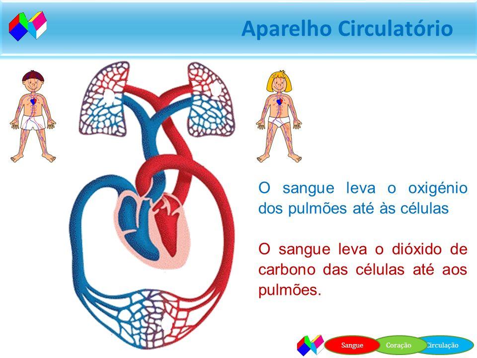 Aparelho Circulatório Como se faz a circulação do sangue? CirculaçãoCoraçãoSangue