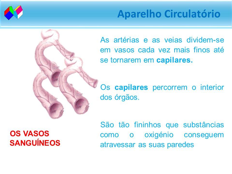 Aparelho Circulatório As artérias são os vasos mais largos e resistentes. Levam o sangue desde o coração até todas as partes do corpo. As veias, são v