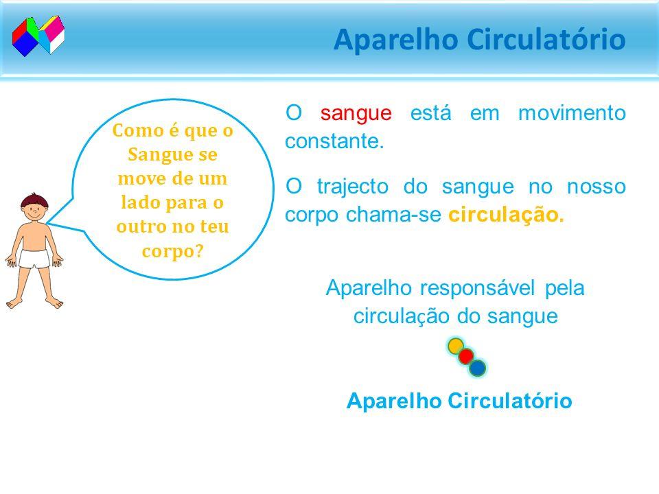 Aparelho Circulatório O sangue está em movimento constante.