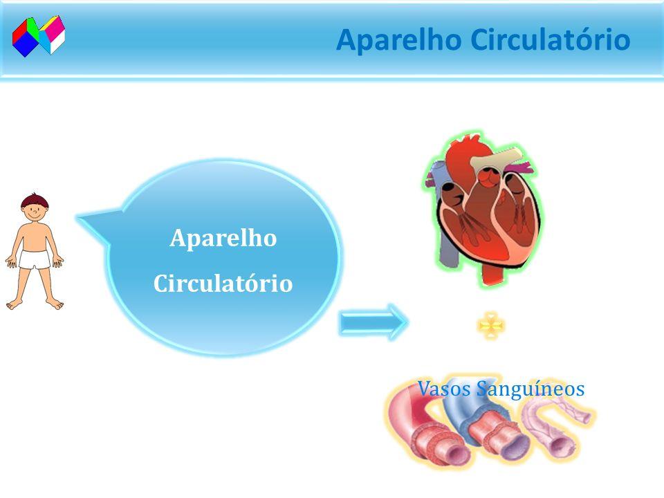 Aparelho Circulatório O sangue está em movimento constante. O trajecto do sangue no nosso corpo chama-se circulação. Aparelho responsável pela circula