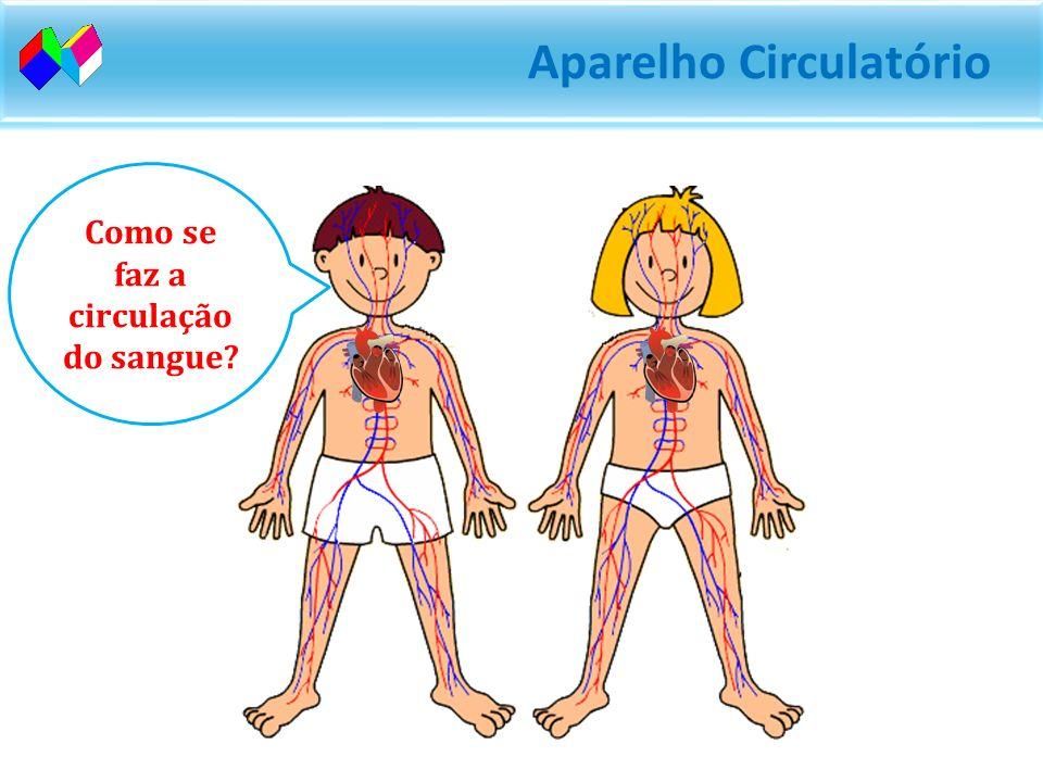 Como se faz a circulação do sangue?