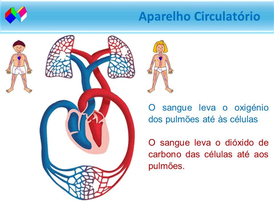 Aparelho Circulatório O sangue leva o oxigénio dos pulmões até às células O sangue leva o dióxido de carbono das células até aos pulmões.