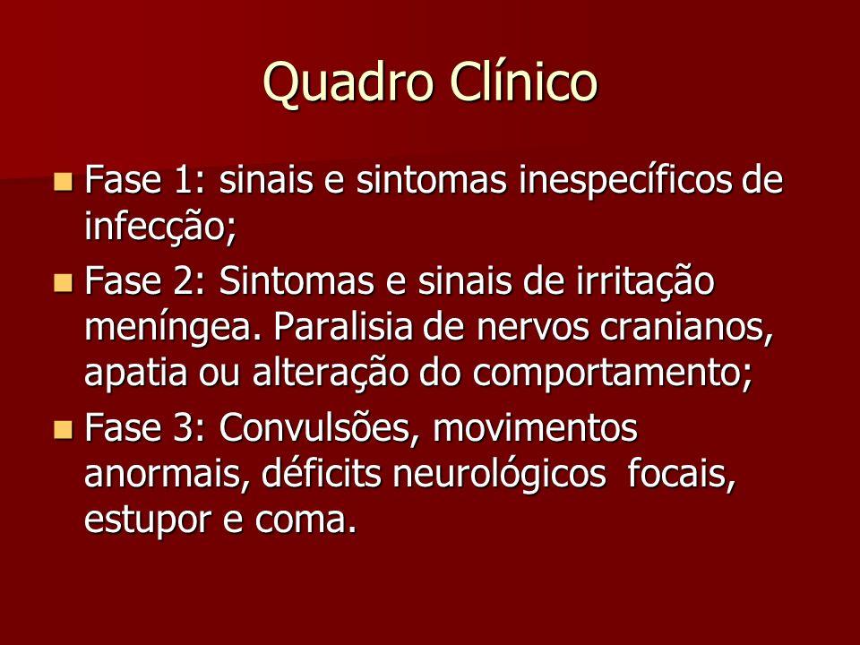 Quadro Clínico Fase 1: sinais e sintomas inespecíficos de infecção; Fase 1: sinais e sintomas inespecíficos de infecção; Fase 2: Sintomas e sinais de