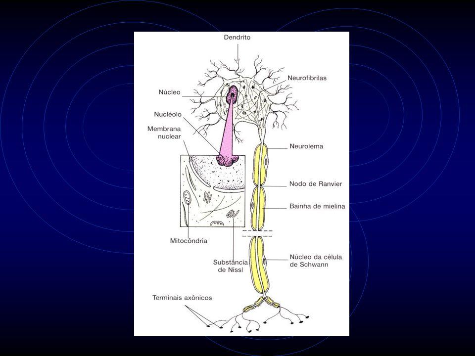 Plexopatia Neuropatia do plexo braquial.Síndrome da Costela cervical.