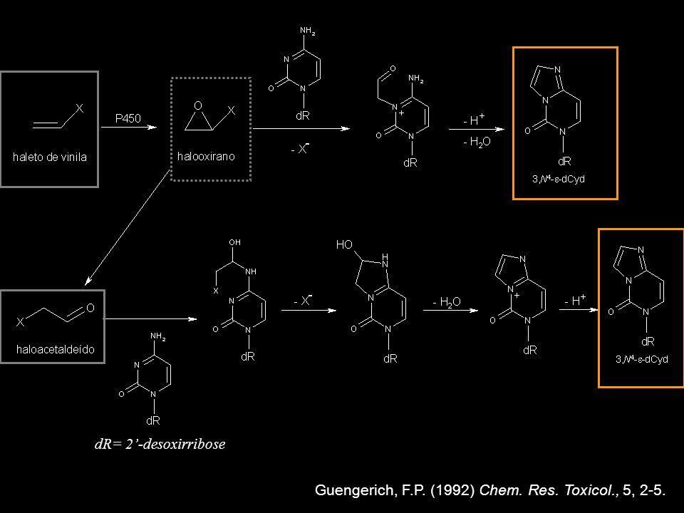 Carcinógenos Cloreto de vinila Carbamato de etila (uretano) P450 Carbamato de vinila dR= 2-desoxirribose