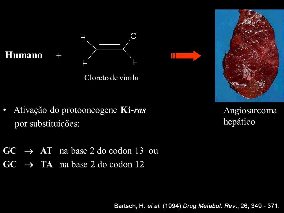 Bartsch, H. et al. (1994) Drug Metabol. Rev., 26, 349 - 371. Ativação do protooncogene Ki-ras por substituições: GC AT na base 2 do codon 13 ou GC TA