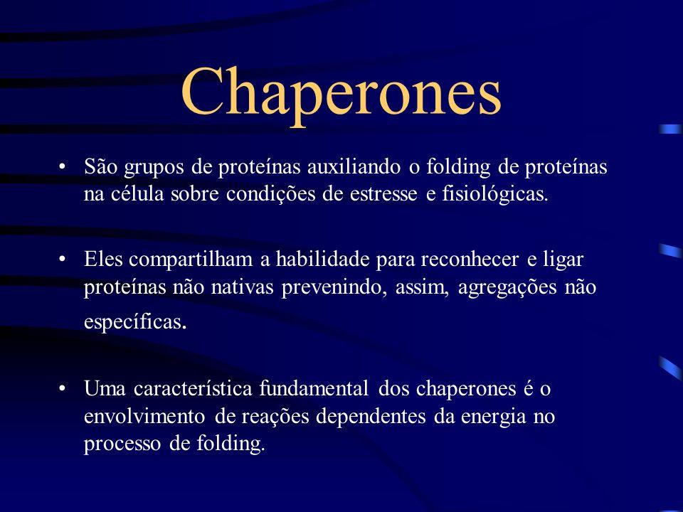 Chaperones São grupos de proteínas auxiliando o folding de proteínas na célula sobre condições de estresse e fisiológicas.