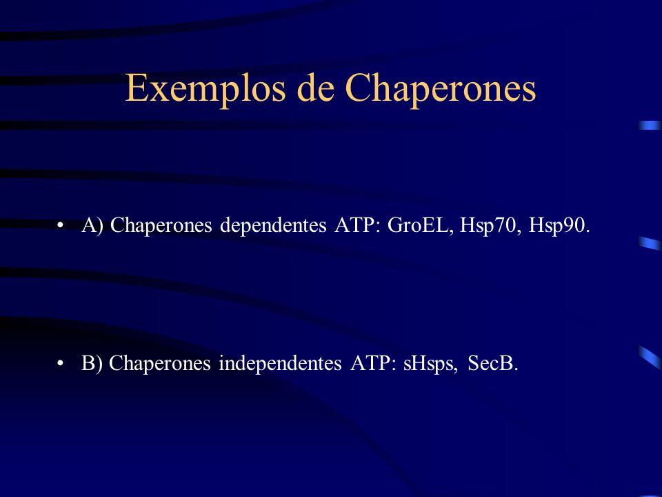 Exemplos de Chaperones A) Chaperones dependentes ATP: GroEL, Hsp70, Hsp90.
