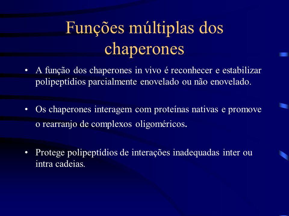 Exemplos de Chaperones A) Chaperones dependentes ATP: GroEL, Hsp70, Hsp90. B) Chaperones independentes ATP: sHsps, SecB.