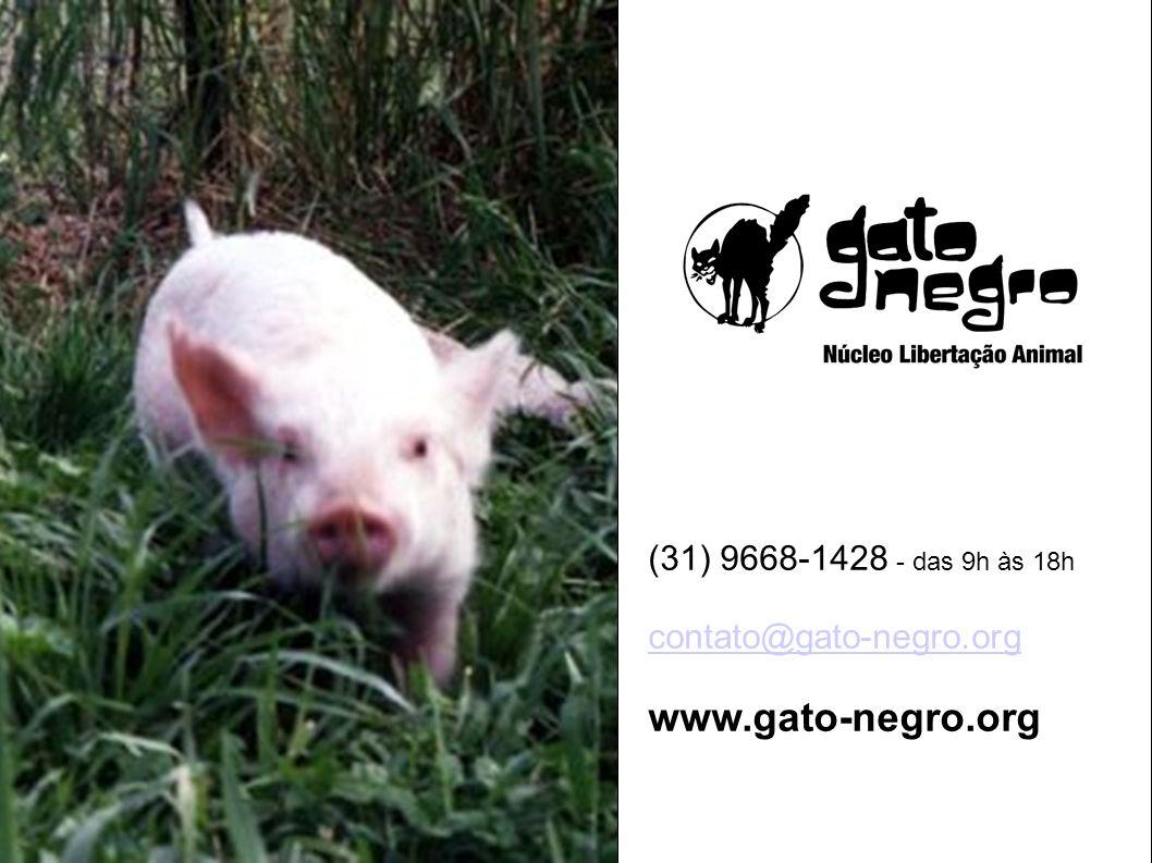 (31) 9668-1428 - das 9h às 18h contato@gato-negro.org www.gato-negro.org