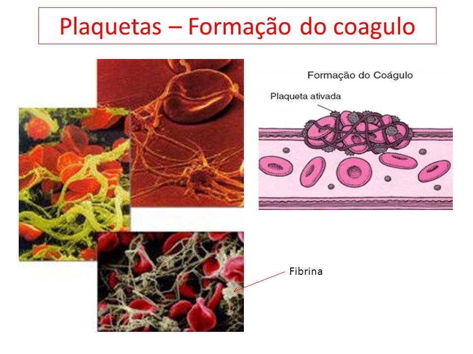 Plaquetas – Formação do coagulo Fibrina
