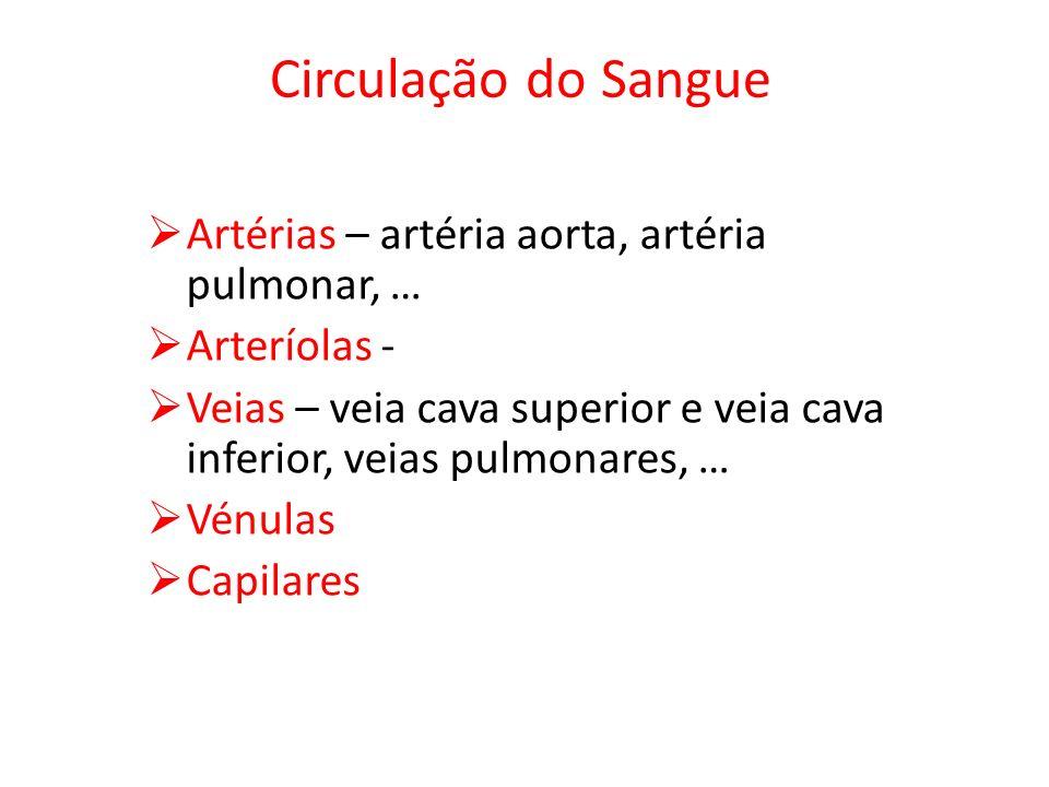 Circulação do Sangue Artérias – artéria aorta, artéria pulmonar, … Arteríolas - Veias – veia cava superior e veia cava inferior, veias pulmonares, … Vénulas Capilares
