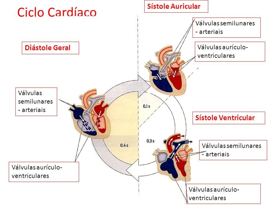 Diástole Geral Sístole Auricular Sístole Ventricular Válvulas semilunares - arteriais Válvulas aurículo- ventriculares Válvulas semilunares - arteriais Válvulas aurículo- ventriculares Válvulas semilunares - arteriais