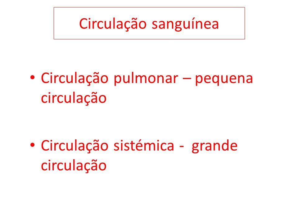 Circulação sanguínea Circulação pulmonar – pequena circulação Circulação sistémica - grande circulação