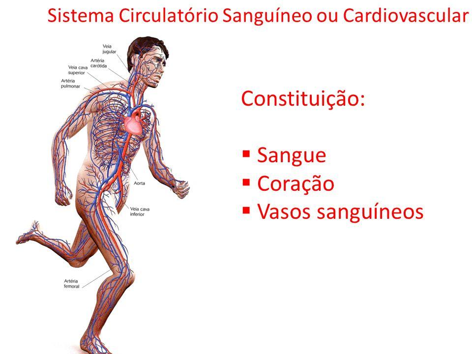 Sistema Circulatório Sanguíneo ou Cardiovascular Constituição: Sangue Coração Vasos sanguíneos