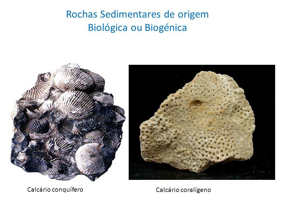 Rochas Sedimentares de origem Biológica ou Biogénica Calcário conquífero Calcário coralígeno