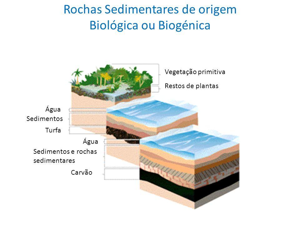 Rochas Sedimentares de origem Biológica ou Biogénica Vegetação primitiva Restos de plantas Turfa Sedimentos e rochas sedimentares Carvão Água Sediment