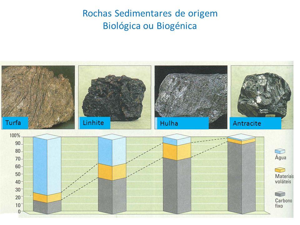 Rochas Sedimentares de origem Biológica ou Biogénica TurfaLinhite HulhaAntracite