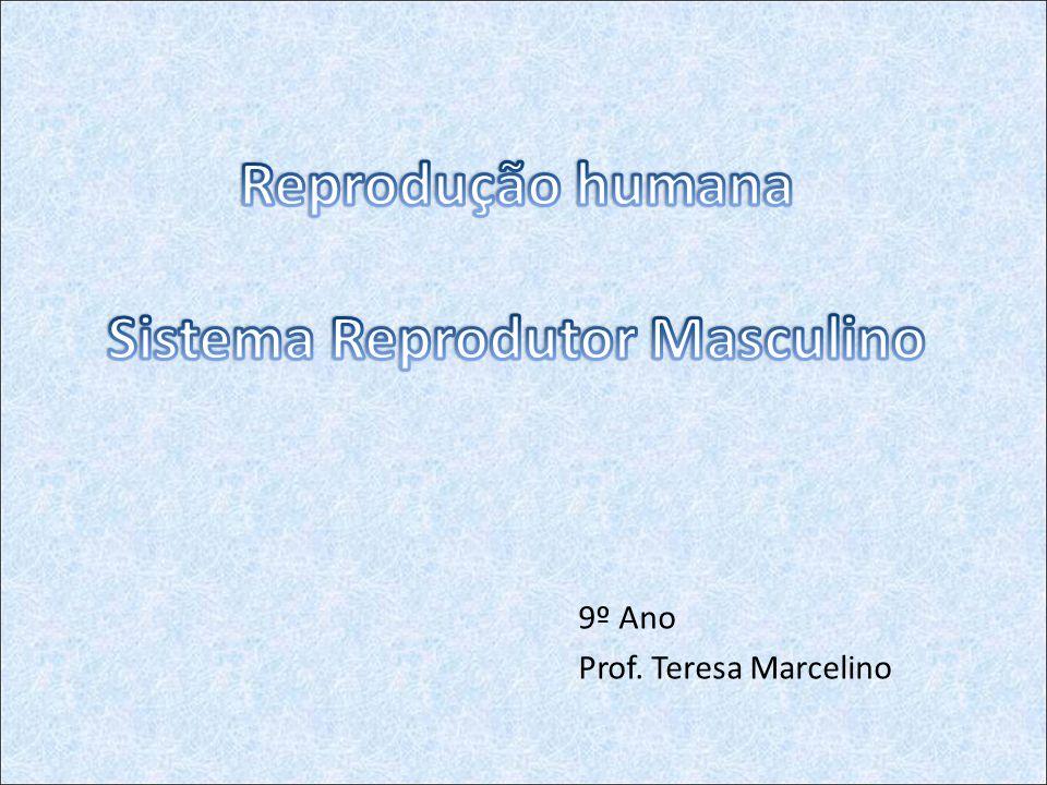 9º Ano Prof. Teresa Marcelino