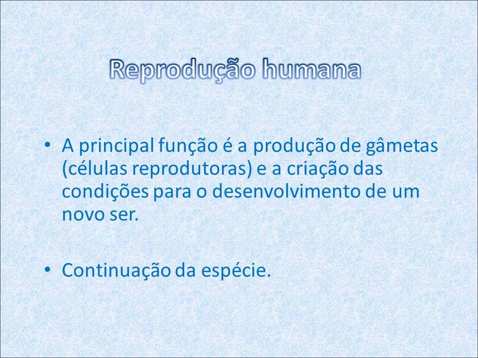 A principal função é a produção de gâmetas (células reprodutoras) e a criação das condições para o desenvolvimento de um novo ser.